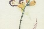 un-fiore-per-ivan2000